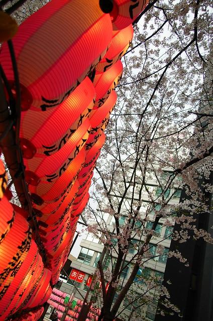 Sakuragaoka 02