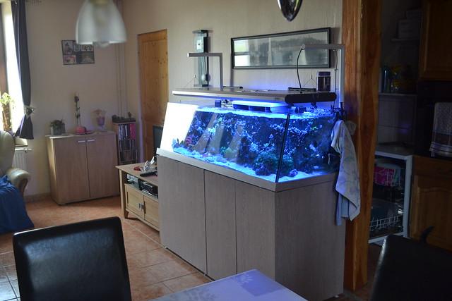 Luc's shallowreef tank 7016039887_42c4dc943d_z