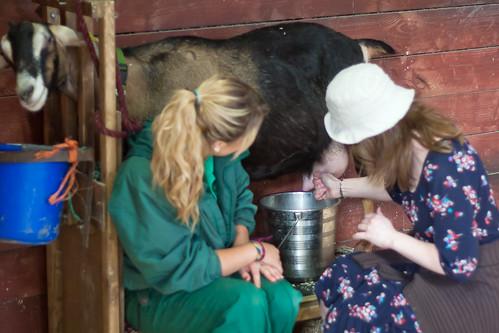 Kate milks a goat