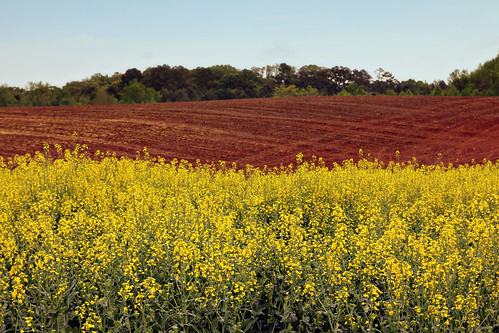 blue trees red sky plants green field lines yellow canon ga landscape day curves clear clay flowering canola hartwell lavonia mtolivet redgeorgiaclay 60d