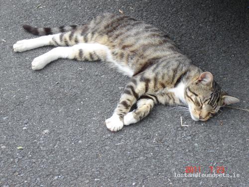 Sun, Apr 1st, 2012 Lost Male Cat - The Downs, Ballingarry, Limerick