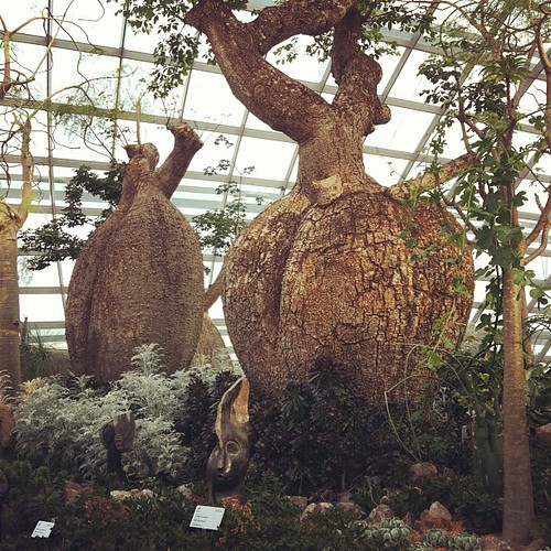 Baobabs? @ Flower Dome of Gardens by the Bay