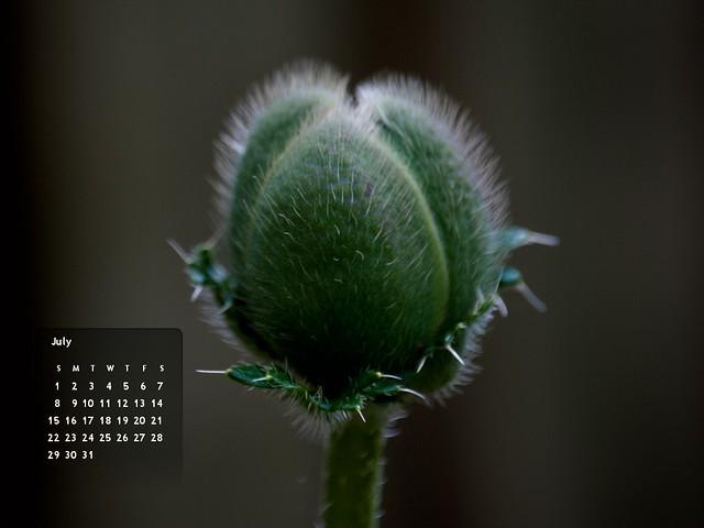July 2012's Calendar :: 1024x768