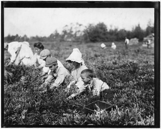 Richard Tevor, 8 years old. 5 years picking cranberries, September 1910