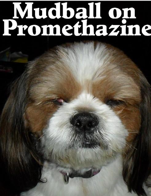 Header of promethazine