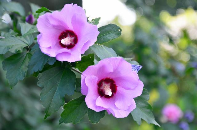 june blooms 2012