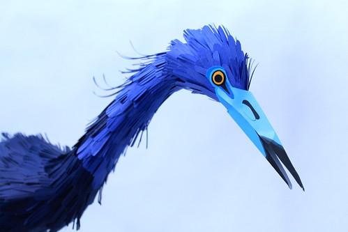 little blue heron detail.