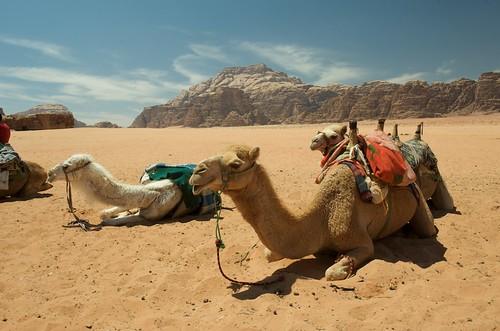 20009-04-10 Wadi Rum-002