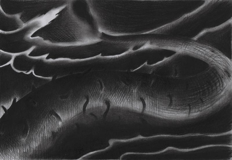 Rens Krikhaars' Holothuroidea - 9