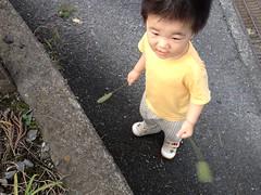 ネコジャラシ二刀流とらちゃん (2012/7/15)