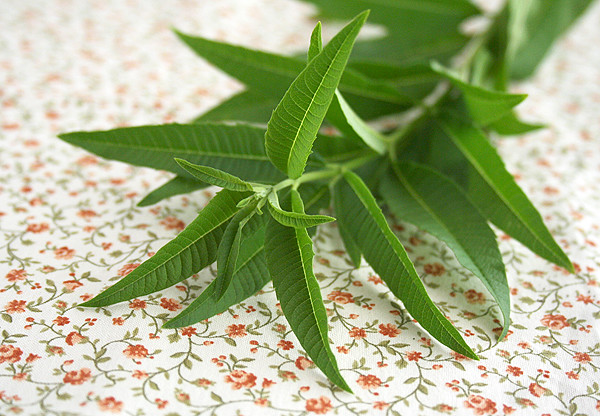 lemon_verbena
