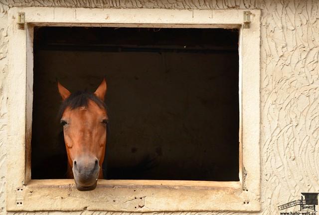 Pferdehof (10)
