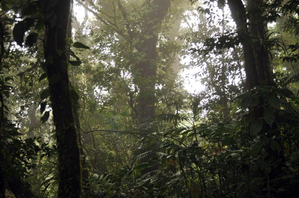 La fina lluvia y las nubes acariciando la selva nos regala bellísimas imágenes durantes el recorrido por cualquiera de las rutas de Monteverde. monteverde, la reserva biológica del bosque nuboso - 7735244072 58cb2b4fb9 o - Monteverde, La reserva biológica del bosque nuboso