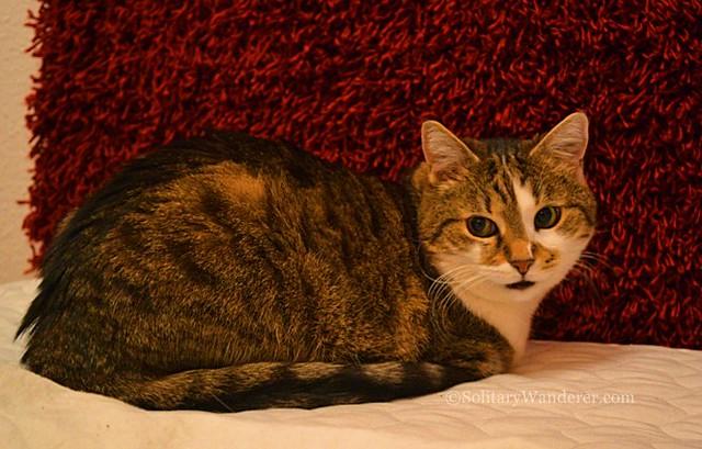 cat in budapest