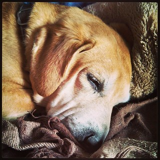 Lazy Saturday morning... #dogstagram #Rescued #houndmix #adoptdontshop #lazymorning #sleepy #ilovemydogs