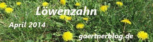 Garten-Koch-Event April 2014: Löwenzahn [30.04.2014]