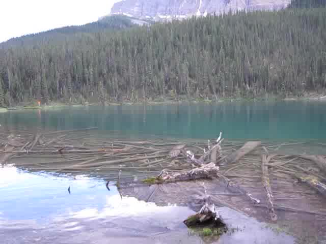 0745 Video of Fish Jumping in Luellen Lake from the JO19 Campsite