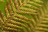 20160424-19_Fern Leaf Fronds_Repeating patterns