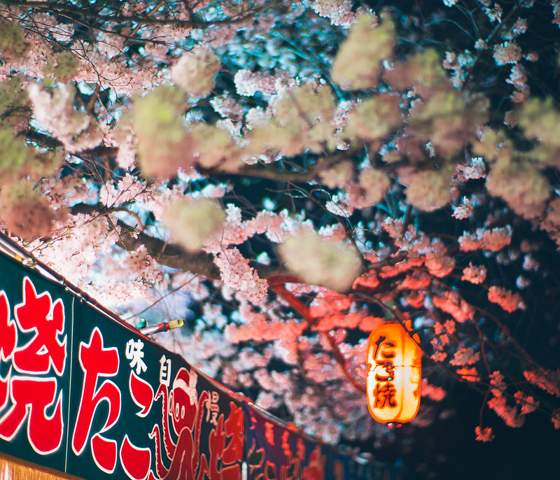 13.Roaming Under The Cherry Blossoms.