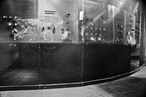 Museo de Paleontología (22)