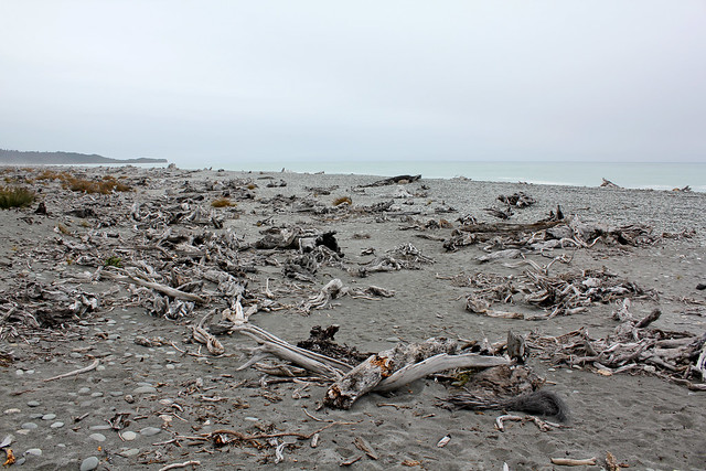 Driftwood on Gillespies Beach