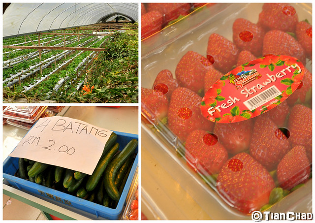 Genting Strawberry Farm with Rose and Mushroom