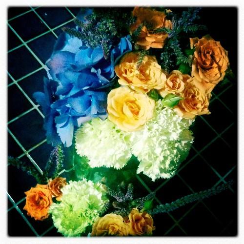 Baby Bertorelli Flowers