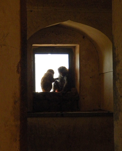 monkeys in a window at Bundi Fort