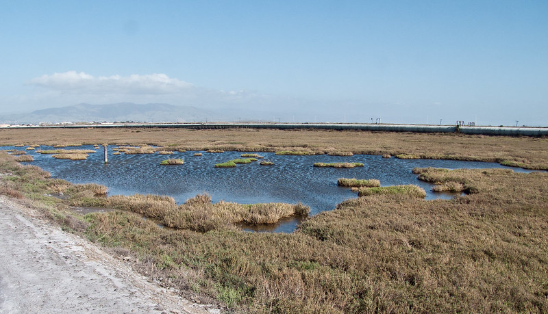 Salt pound, Don Edwards San Francisco Bay National Wildlife Refuge