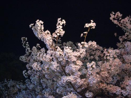 夜桜2012@大中公園(大和高田市)-08