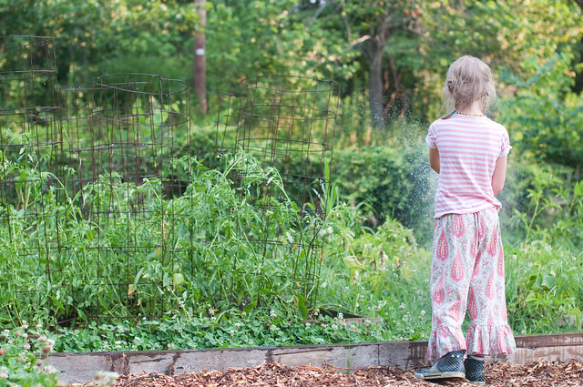 June 30 garden journal