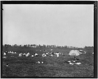 General view of part of Whites Bog. Brown Mills, N.J., September 1910