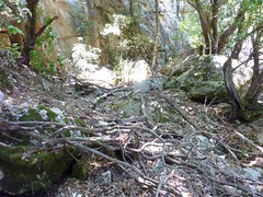 Le vieux chemin en RD en aval de la brèche du Carciara : peu après sous la brèche
