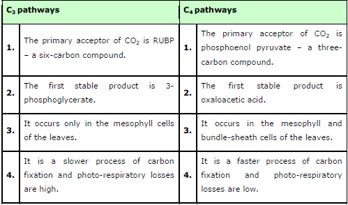 Ncert Solutions Class 11th Biology Chapter 13 Photosynthesis In