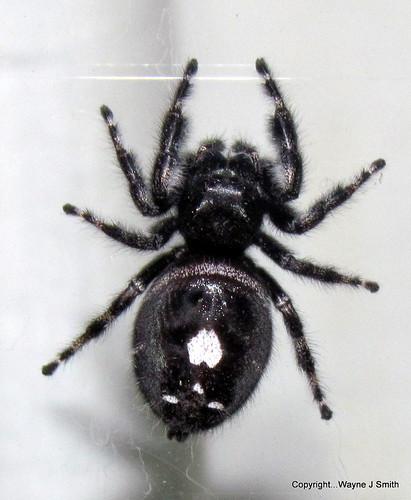 Tarantula Big Bend Texas Spiders Whatbird Com Community