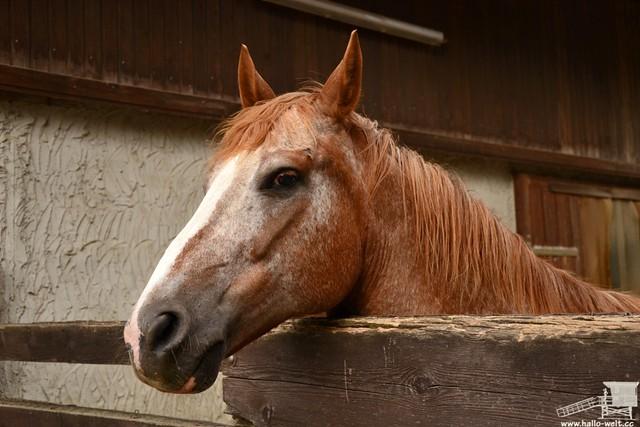 Pferdehof (11)