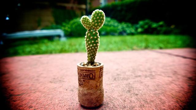 anteketborka.blogspot.com, cactus9