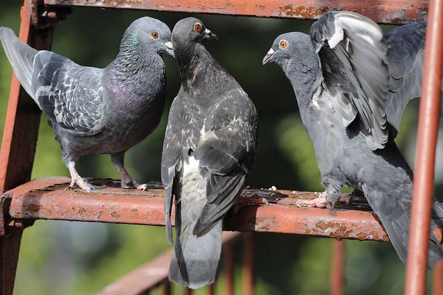 meeting of the beaks