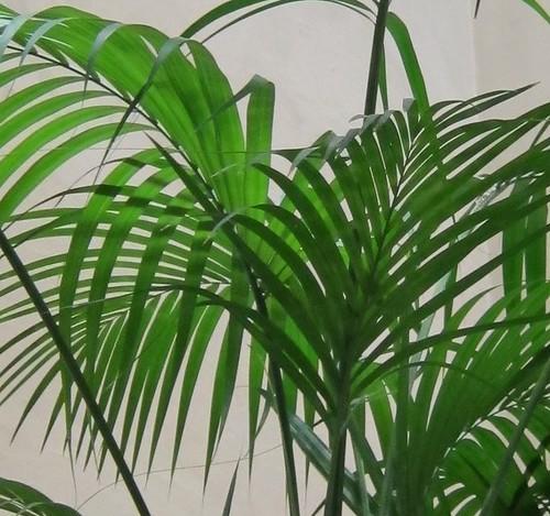 Palmu