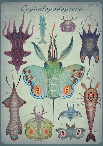 Cephalopodoptera tab I by VLADIMIR... . . .