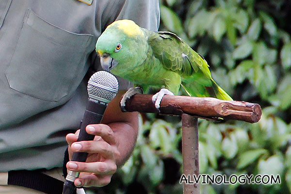 The show started with a bird mimicking the human voice very accurately