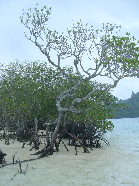 Mangroves do help so handle it with care