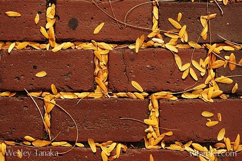 Bricks and Leaves