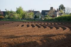 Potato-Fields