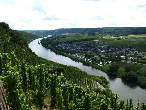 WiltingenUpperMosel