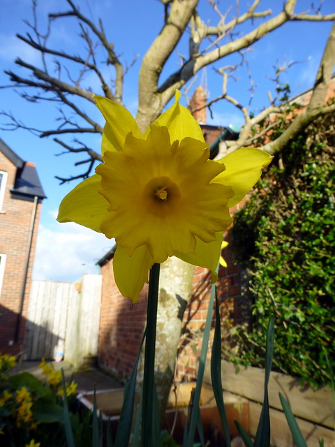 Spring Sunshine Mar14