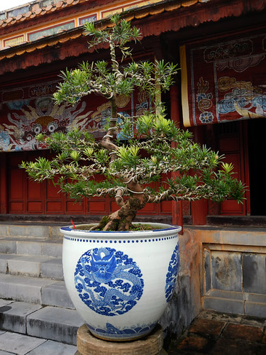 Minh Mang Tomb in Hue: Bonsai in Dragon Pot