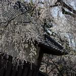 0404_chiyoda-20