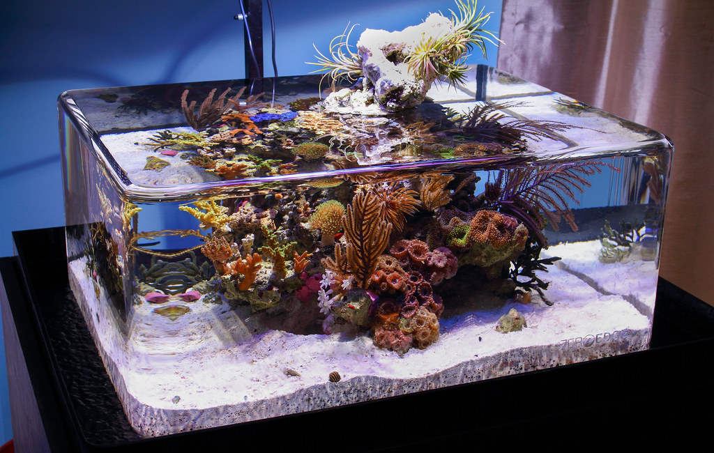 Hypes edgeless ridge islet page 5 reef central online for Inverted fish tank