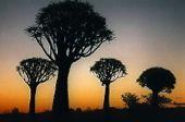 Komfort-Trekking Namibia. Die riesigen Sanddünen von Sossuvlei.